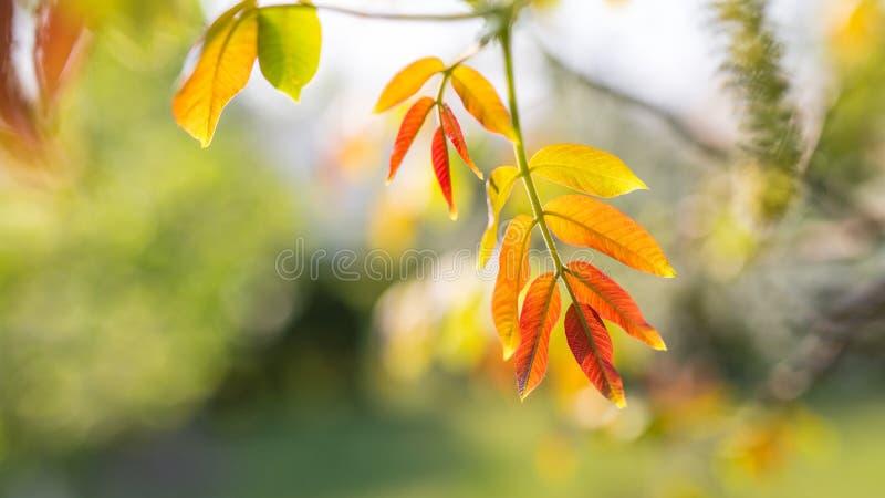 Όμορφα ζωηρόχρωμα φύλλα, εποχιακό υπόβαθρο φύσης στοκ εικόνα με δικαίωμα ελεύθερης χρήσης