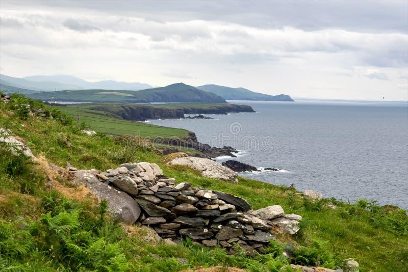 Όμορφη άποψη Dingle Drive Slea στην επικεφαλής χερσόνησο, ιρλανδική αγελάδα, Ιρλανδία στοκ εικόνες