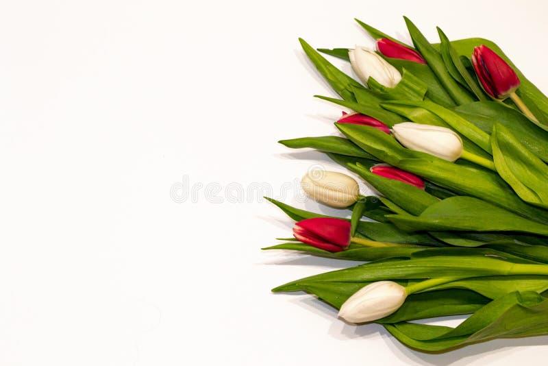 Όμορφη ανθοδέσμη των κόκκινων και άσπρων λουλουδιών κουμπιών τουλιπών που απομονώνονται στο άσπρο υπόβαθρο Ευχετήρια κάρτα για Va στοκ φωτογραφία