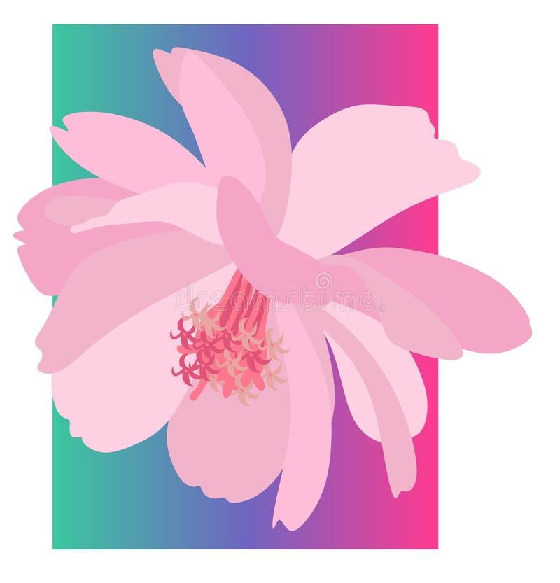 Όμορφη κάρτα με ένα ρόδινο λουλούδι κόσμου υφασμάτων που απομονώνεται σε ένα ζωηρόχρωμο υπόβαθρο σε ένα διάνυσμα ελεύθερη απεικόνιση δικαιώματος