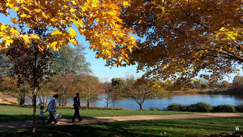 Όμορφη λίμνη στο βοτανικό κήπο του Σικάγου στοκ εικόνα