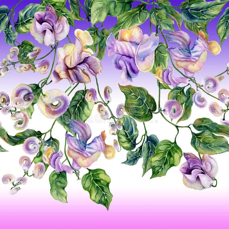 Όμορφοι κλαδίσκοι αμπέλων σαλιγκαριών με τα πορφυρά λουλούδια στο υπόβαθρο κλίσης Άνευ ραφής floral σχέδιο, σύνορα υψηλό watercol ελεύθερη απεικόνιση δικαιώματος