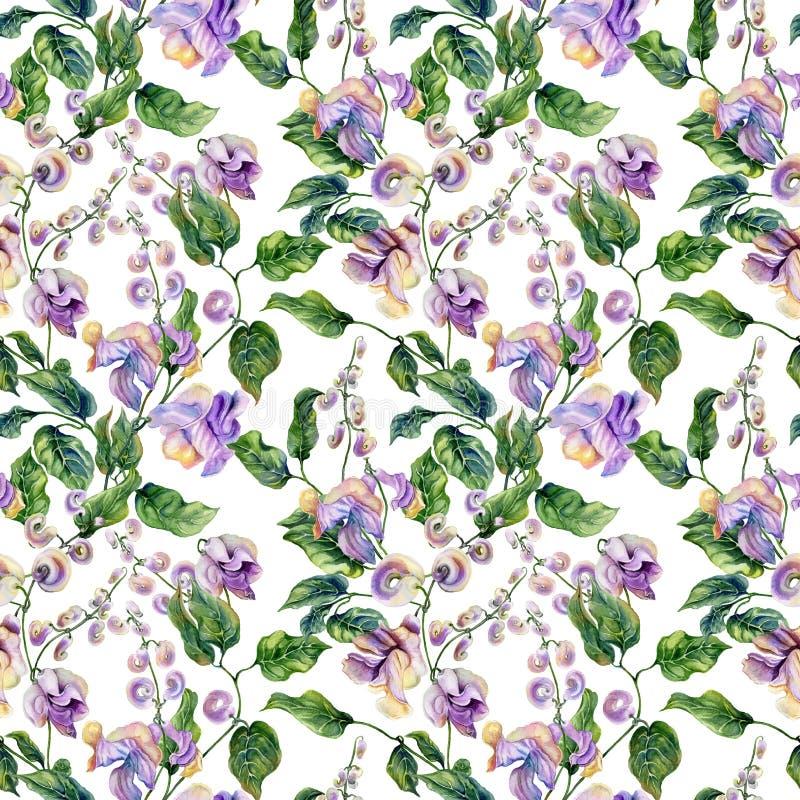 Όμορφοι κλαδίσκοι αμπέλων σαλιγκαριών με τα πορφυρά λουλούδια στο άσπρο υπόβαθρο floral πρότυπο άνευ ραφής υψηλό watercolor ποιοτ διανυσματική απεικόνιση