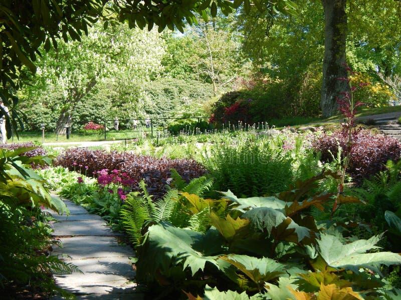Όμορφος χρόνος κήπων την άνοιξη στη Σουηδία στοκ εικόνα