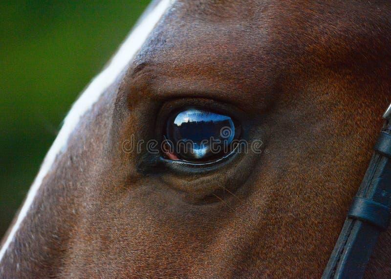 Όμορφο και ενδιαφέρον μάτι ενός κόκκινου αλόγου στοκ φωτογραφία με δικαίωμα ελεύθερης χρήσης