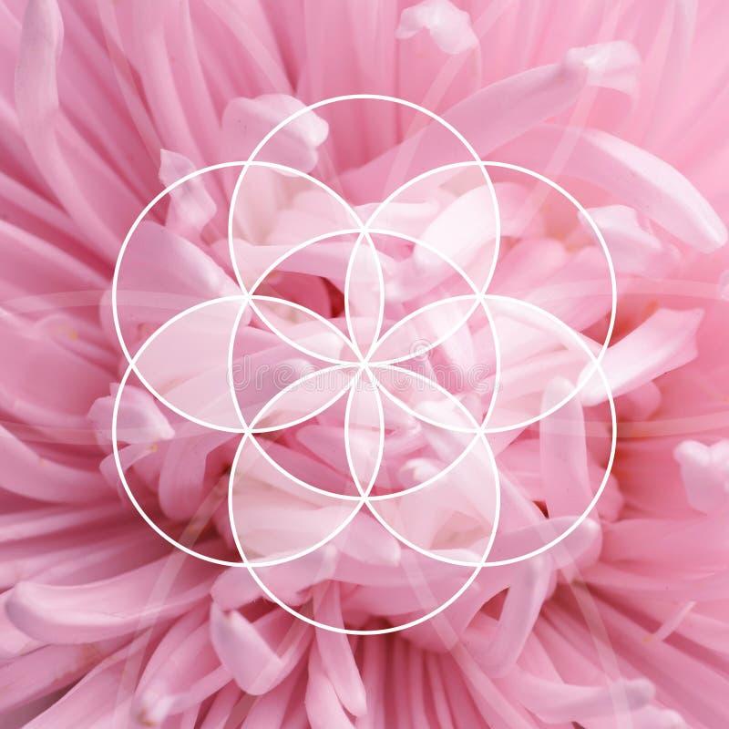 Όμορφο λουλούδι αστέρων ως υπόβαθρο απεικόνιση αποθεμάτων
