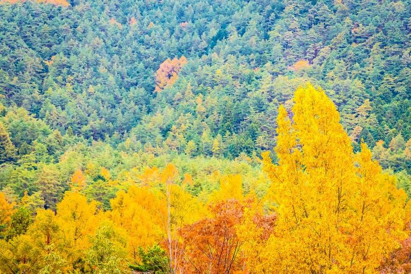 Όμορφο τοπίο πολύ δέντρο με το ζωηρόχρωμο φύλλο γύρω από το βουνό στοκ φωτογραφία με δικαίωμα ελεύθερης χρήσης