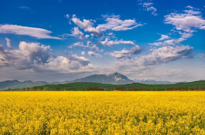 Όμορφο φυσικό τοπίο άνοιξη με τις ζωηρόχρωμες φωτεινές κίτρινες συγκομιδές napus κραμβολαχάνου συναπόσπορων και το δραματικό βαθύ στοκ φωτογραφίες
