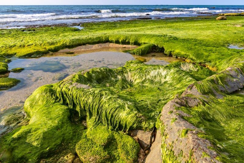 Όψη της παραλίας at low tide Πέτρες που καλύπτονται με το πράσινο υγρό φύκι με τις λακκούβες του νερού μεταξύ στοκ εικόνες με δικαίωμα ελεύθερης χρήσης