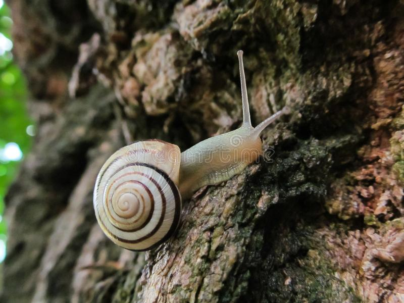 Σαλιγκάρι που σέρνεται σε ένα δέντρο ή έναν φλοιό στοκ φωτογραφίες