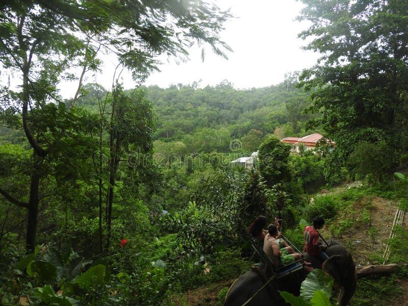 Σαφάρι ελεφάντων στο γραφικό πάρκο Dao Pak στην Ταϊλάνδη στοκ εικόνες