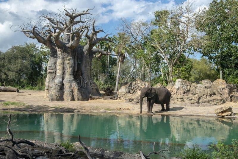 Σαφάρι Kilimanjaro, κόσμος της Disney, ζωικό βασίλειο, ταξίδι στοκ εικόνες
