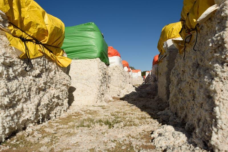 Σειρές των μεγάλων πρόσφατα συγκομισμένων δεμάτων του ακατέργαστου άσπρου βαμβακιού έτοιμου για την επεξεργασία στοκ εικόνες