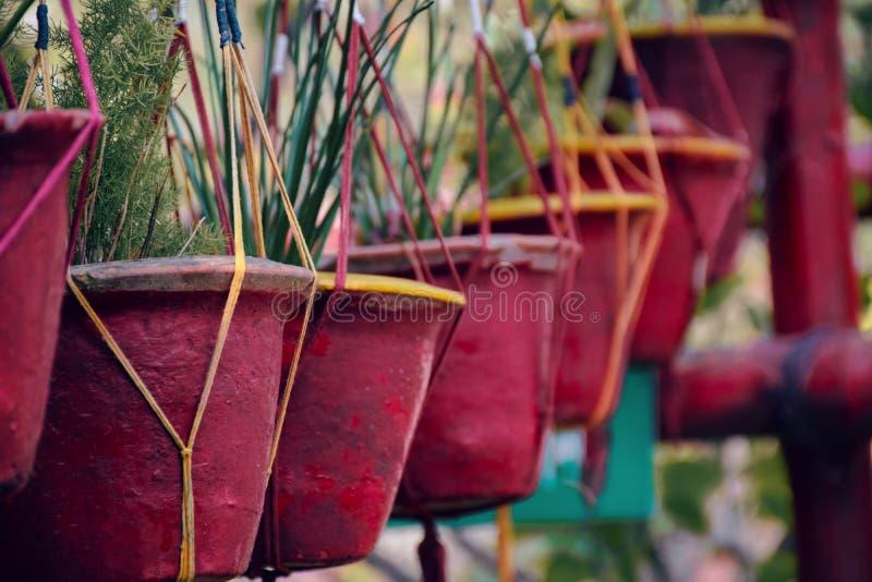 Σκάφες λουλουδιών στοκ φωτογραφίες