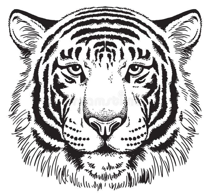 Σκίτσο ενός Tiger' πρόσωπο του s διανυσματική απεικόνιση