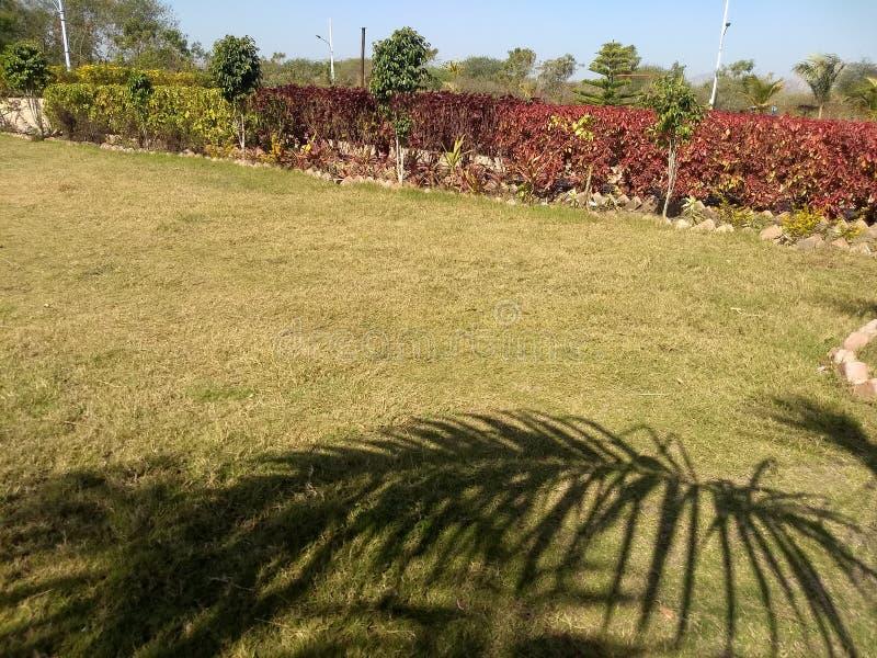 Σκιά δέντρων στοκ εικόνα