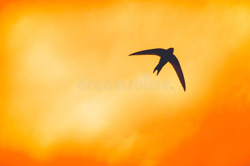 Σκιαγραφία του κύψελλοσυ στο ηλιοβασίλεμα στοκ φωτογραφίες με δικαίωμα ελεύθερης χρήσης