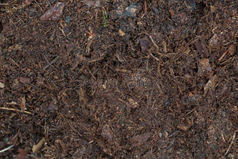 Σκοτεινό καφετί φυτόχωμα στο δασικό χώμα στοκ φωτογραφία με δικαίωμα ελεύθερης χρήσης