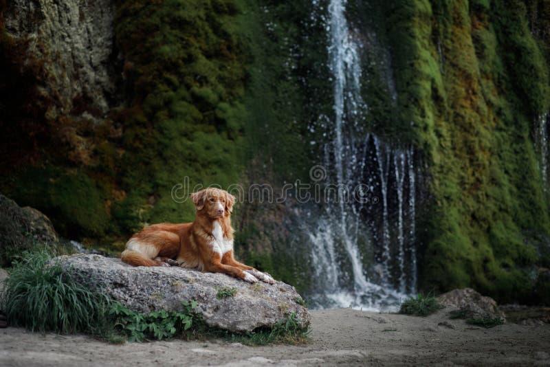 Σκυλί στον καταρράκτη Pet στη φύση έξω σκυλί λίγος ποταμός σχεδιαγράμματος στοκ φωτογραφία