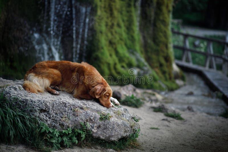 Σκυλί στον καταρράκτη Pet στη φύση έξω σκυλί λίγος ποταμός σχεδιαγράμματος στοκ φωτογραφίες