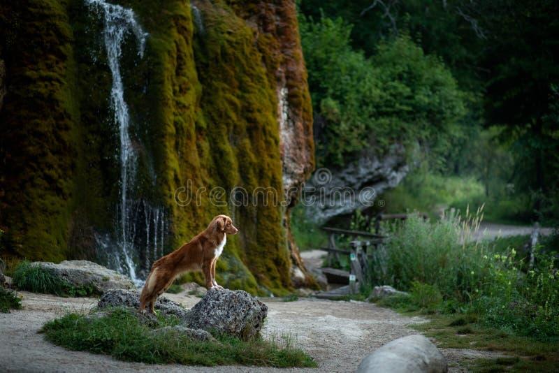 Σκυλί στον καταρράκτη Pet στη φύση έξω σκυλί λίγος ποταμός σχεδιαγράμματος στοκ εικόνες