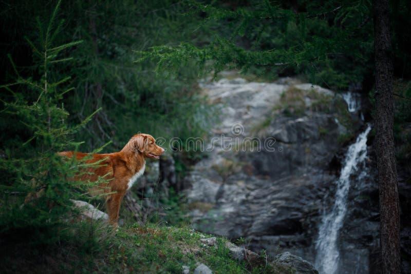 Σκυλί στον καταρράκτη Pet στη φύση έξω σκυλί λίγος ποταμός σχεδιαγράμματος στοκ φωτογραφία με δικαίωμα ελεύθερης χρήσης