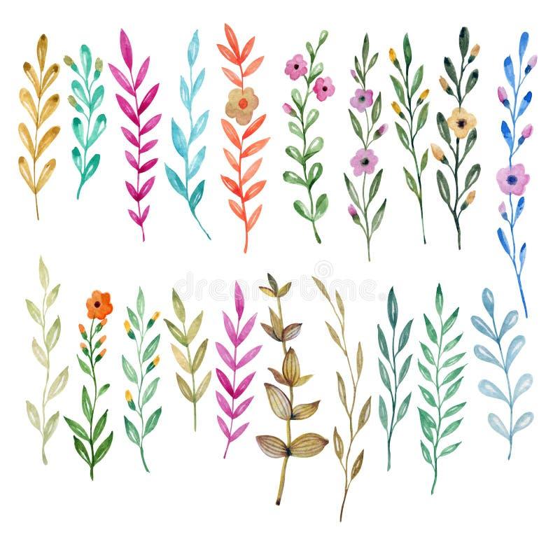 Σύνολο στοιχείων εγκαταστάσεων τράπεζες που σύρουν το τύλιγμα watercolor δέντρων ποταμών ανθίσματος Λουλούδια και φύλλα σε ένα άσ απεικόνιση αποθεμάτων