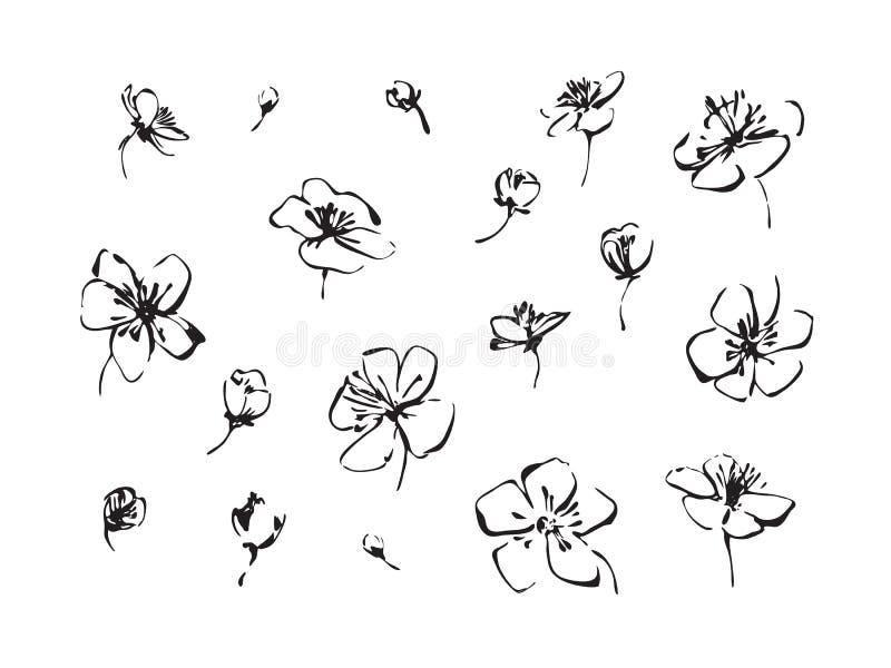 Σύνολο συρμένων χέρι ανθών κερασιών χρωμάτων βουρτσών Λουλούδια περιλήψεων Sakura που χρωματίζουν από το μελάνι Μαύρο απομονωμένο απεικόνιση αποθεμάτων