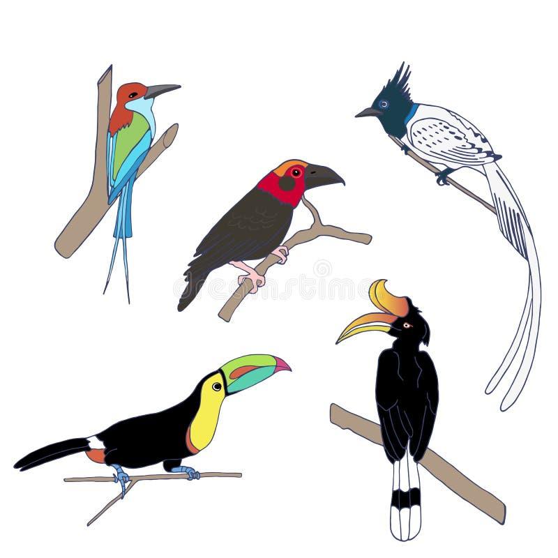 Σύνολο των εξωτικών πουλιών που στέκονται στο δέντρο διανυσματική απεικόνιση