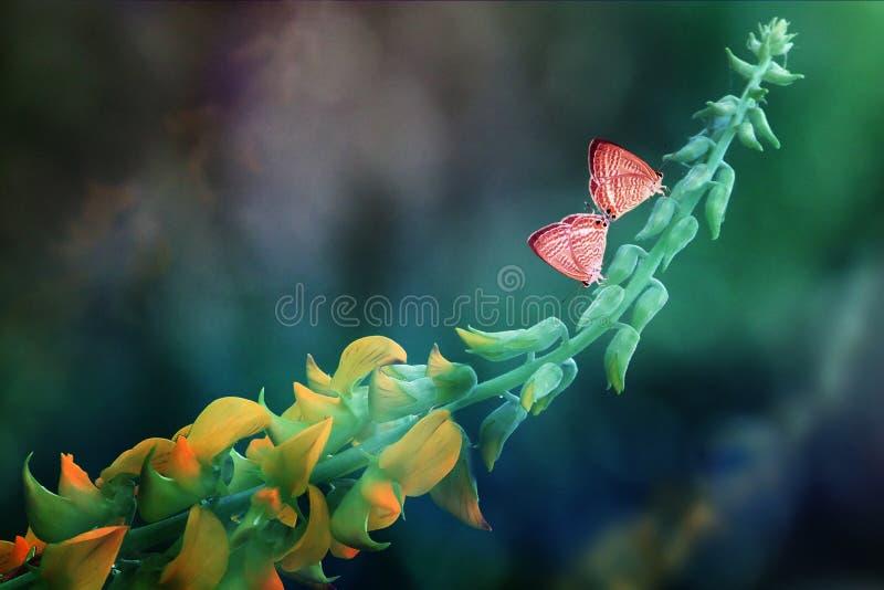 Σύντροφος πεταλούδων στοκ φωτογραφία με δικαίωμα ελεύθερης χρήσης