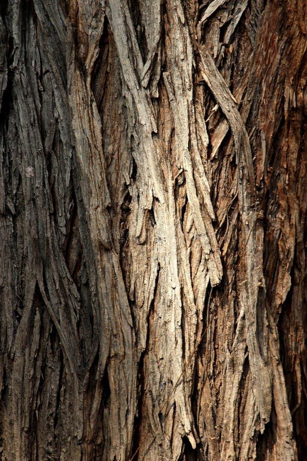 Σύσταση δέντρων, φλοιός δέντρων στοκ φωτογραφία