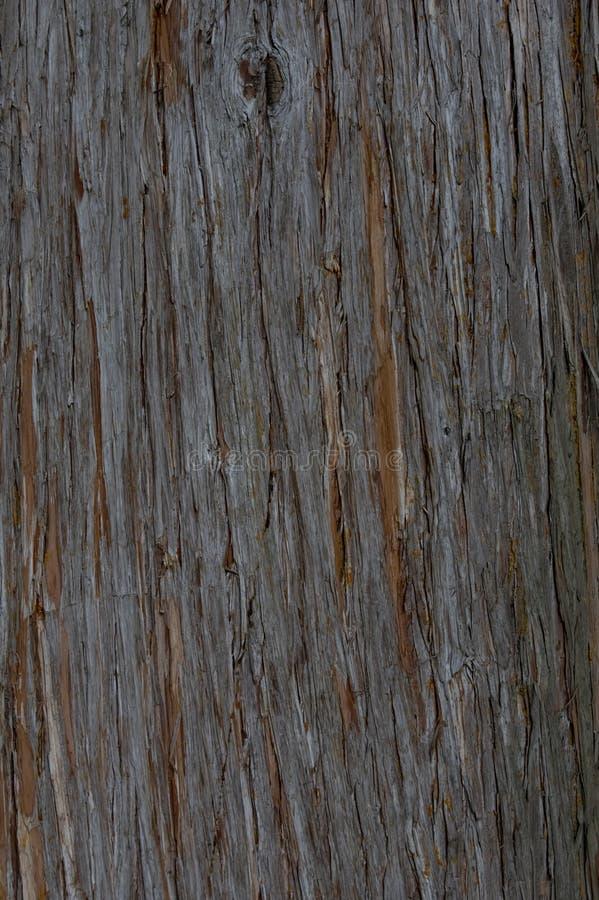 Σύσταση του φλοιού ενός δέντρου στοκ φωτογραφίες με δικαίωμα ελεύθερης χρήσης