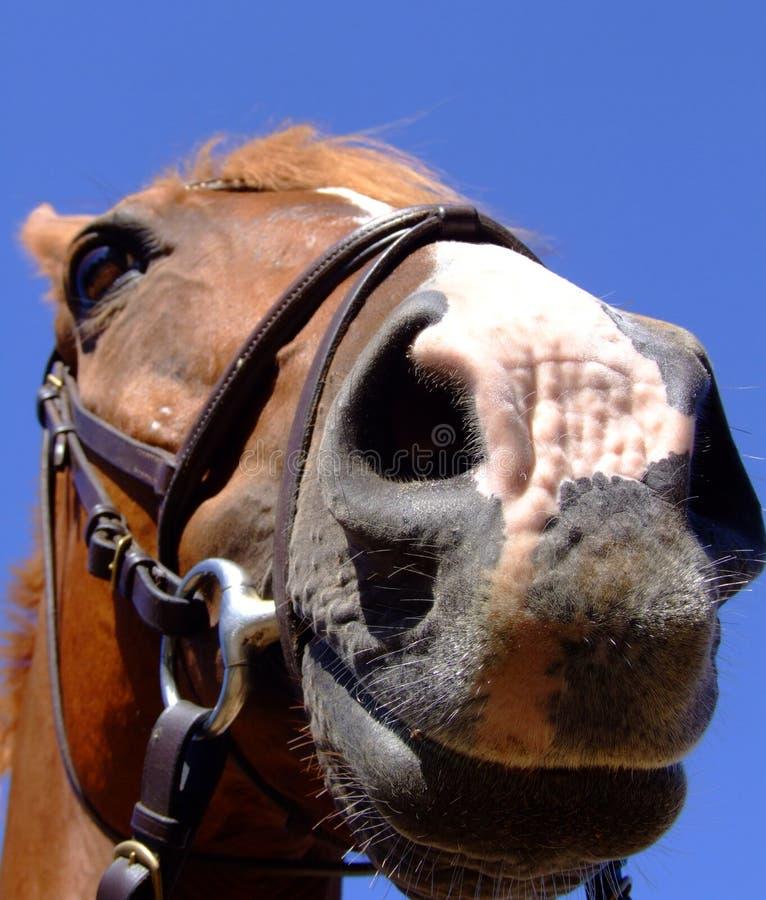 στενό άλογο επάνω στοκ εικόνα