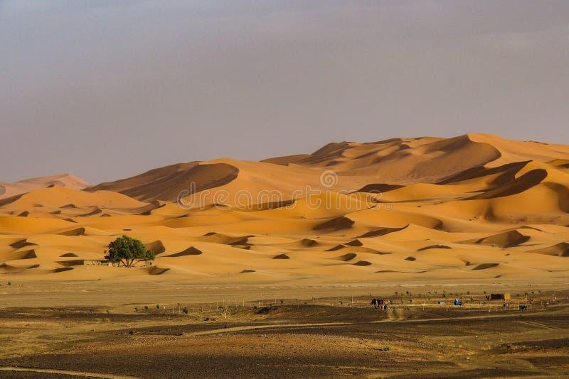 Στους αμμόλοφους Erg Chebbi κοντά σε Merzouga στο νοτιοανατολικό Μαρόκο στοκ φωτογραφία με δικαίωμα ελεύθερης χρήσης