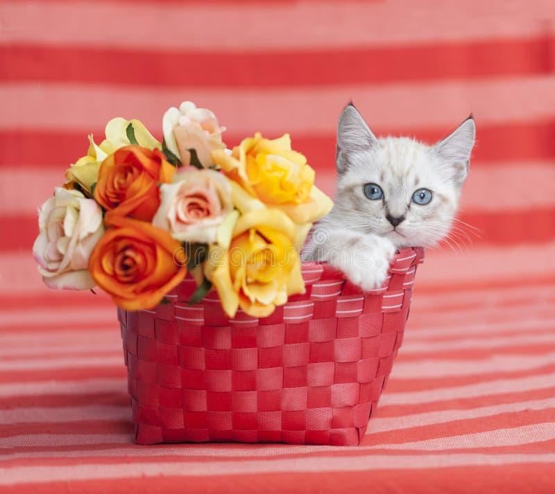 Συνεδρίαση γατακιών μακρυά από τα τριαντάφυλλα, πορτοκαλί καλάθι στοκ εικόνες
