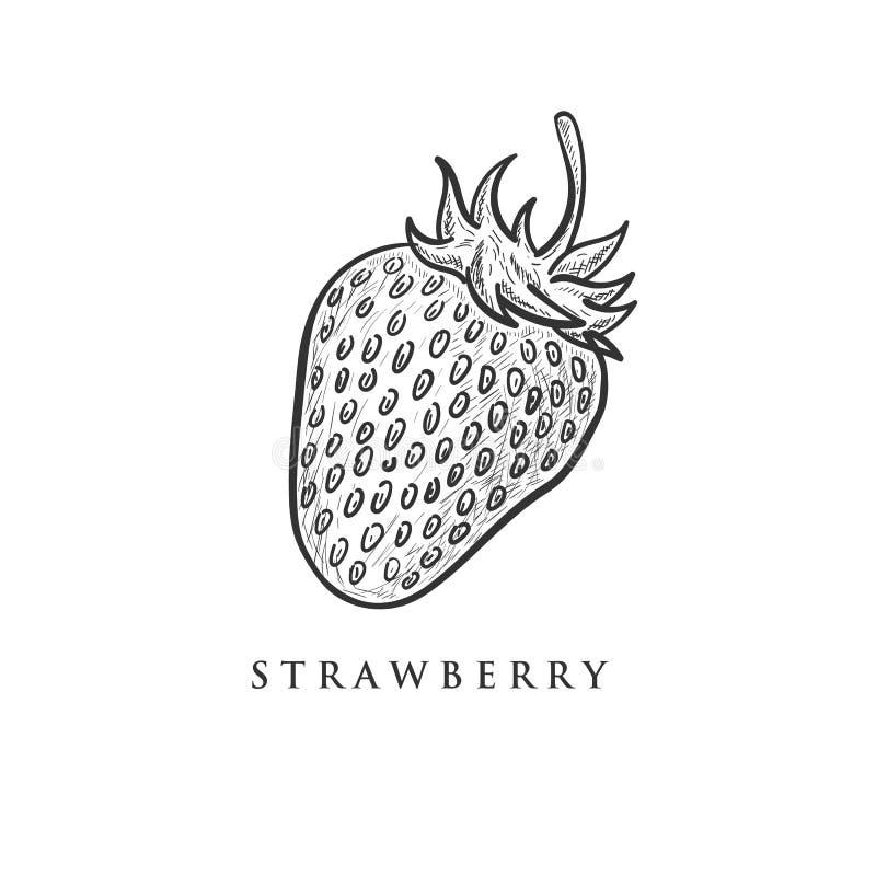 Συρμένα χέρι σχέδια φραουλών, retor, τρύγος απεικόνιση αποθεμάτων