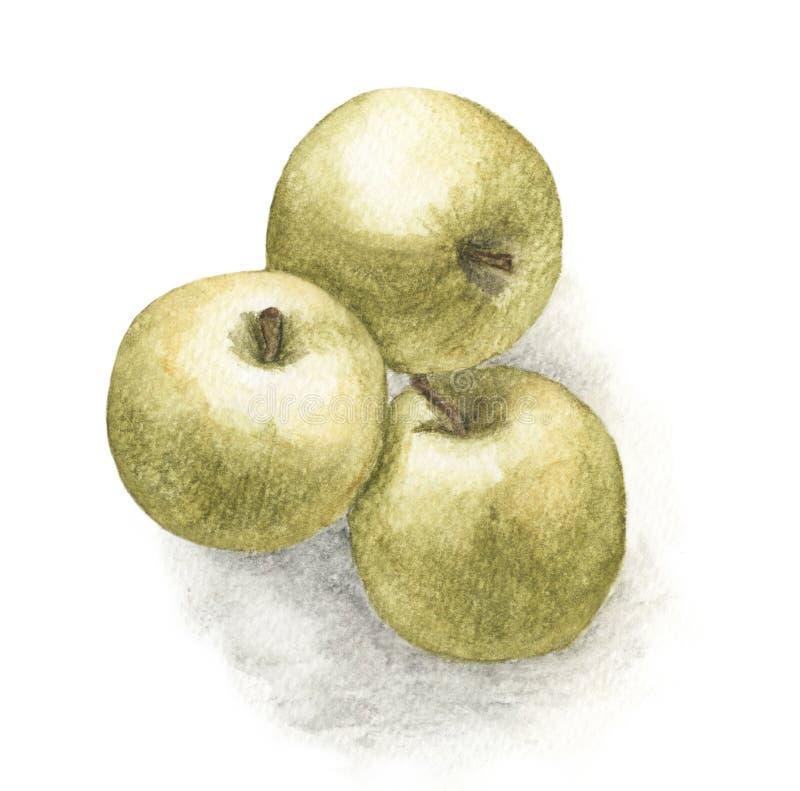 Συρμένη χέρι ζωγραφική watercolor των πράσινων μήλων στο άσπρο υπόβαθρο απεικόνιση αποθεμάτων