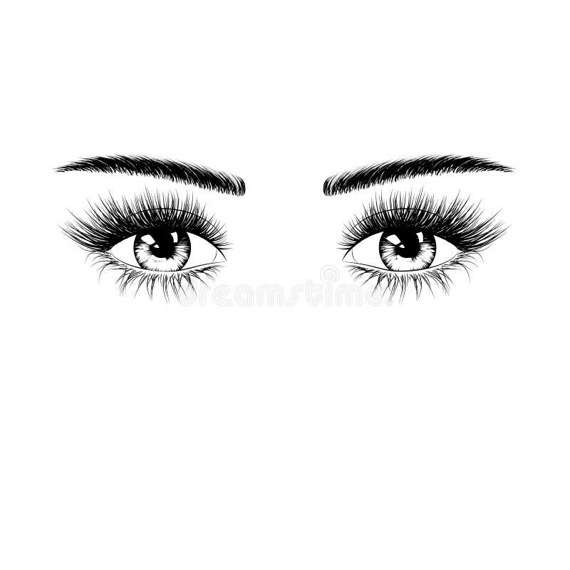 Συρμένη χέρι θηλυκή σκιαγραφία ματιών με τα eyelashes και τα φρύδια Διανυσματική απεικόνιση που απομονώνεται στην άσπρη ανασκόπησ ελεύθερη απεικόνιση δικαιώματος