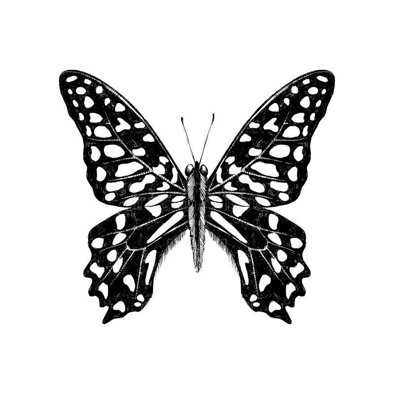 Συρμένη χέρι παρακολουθημένη πεταλούδα του Jay - Graphium agamemnon απεικόνιση αποθεμάτων