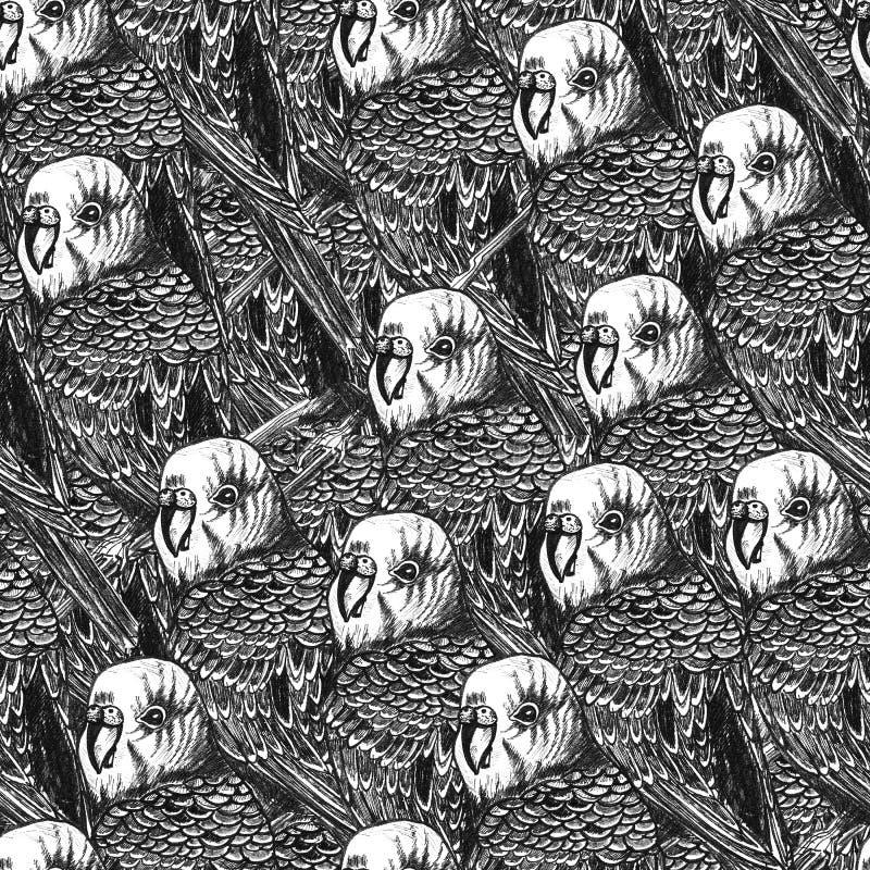 Συρμένο χέρι άνευ ραφής σχέδιο με τους παπαγάλους διανυσματική απεικόνιση