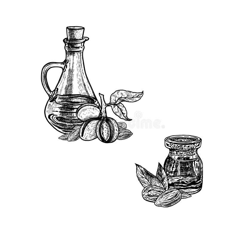 Συρμένο χέρι σκίτσο του πετρελαίου αμυγδάλων Εκχύλισμα των εγκαταστάσεων επίσης corel σύρετε το διάνυσμα απεικόνισης διανυσματική απεικόνιση