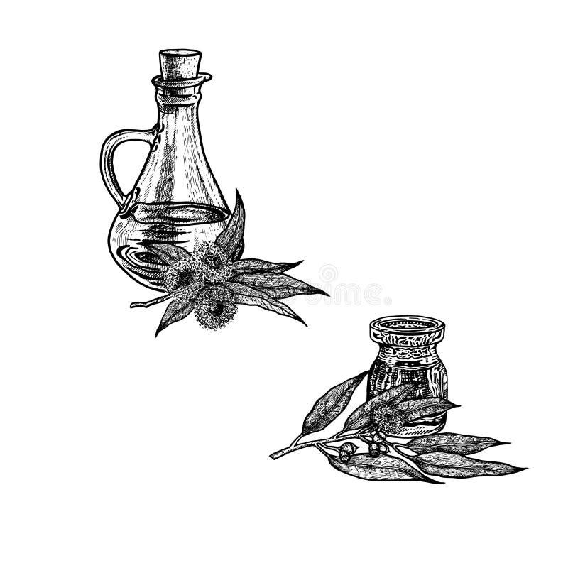 Συρμένο χέρι σκίτσο του πετρελαίου ευκαλύπτων Εκχύλισμα των εγκαταστάσεων επίσης corel σύρετε το διάνυσμα απεικόνισης απεικόνιση αποθεμάτων