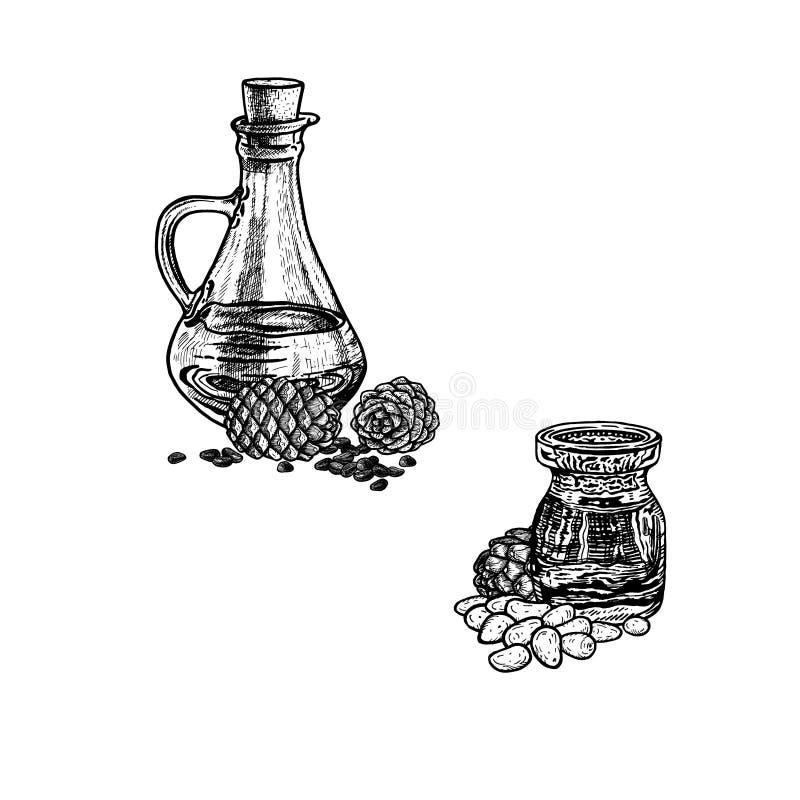 Συρμένο χέρι σκίτσο του πετρελαίου καρυδιών πεύκων Εκχύλισμα των εγκαταστάσεων επίσης corel σύρετε το διάνυσμα απεικόνισης διανυσματική απεικόνιση