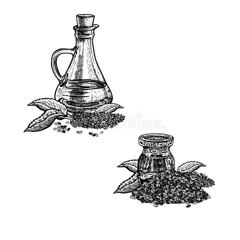 Συρμένο χέρι σκίτσο του πετρελαίου chia Εκχύλισμα των εγκαταστάσεων επίσης corel σύρετε το διάνυσμα απεικόνισης ελεύθερη απεικόνιση δικαιώματος
