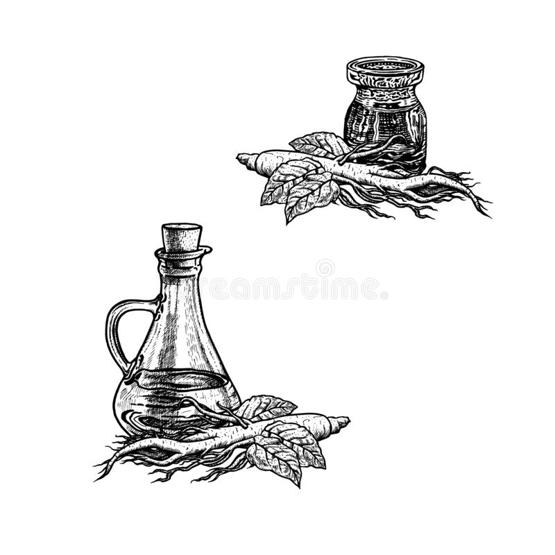 Συρμένο χέρι σκίτσο του πετρελαίου ginseng Εκχύλισμα των εγκαταστάσεων επίσης corel σύρετε το διάνυσμα απεικόνισης ελεύθερη απεικόνιση δικαιώματος