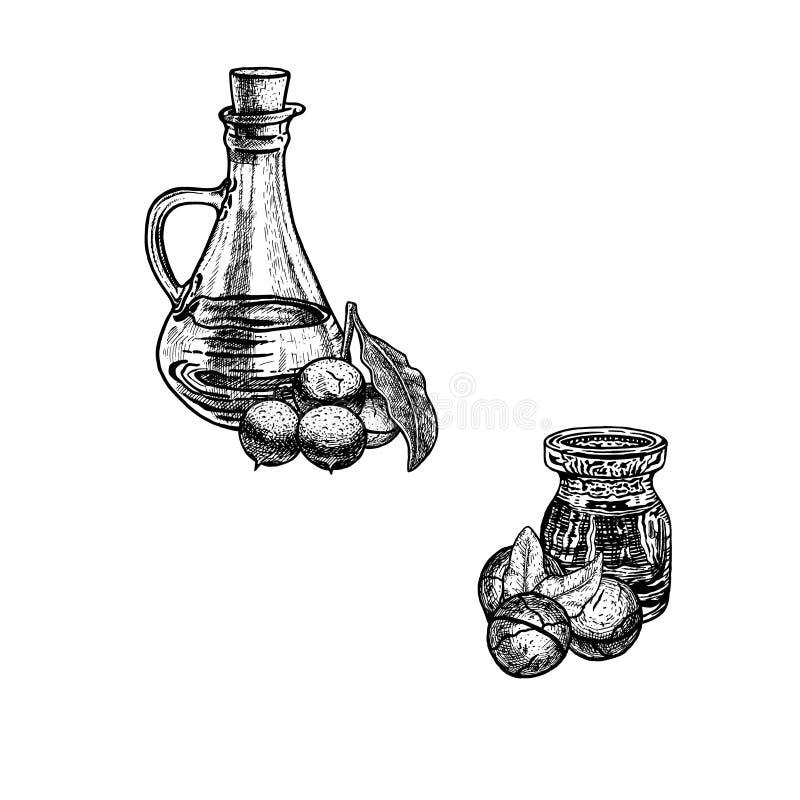 Συρμένο χέρι σκίτσο macadamia του πετρελαίου Εκχύλισμα των εγκαταστάσεων επίσης corel σύρετε το διάνυσμα απεικόνισης απεικόνιση αποθεμάτων