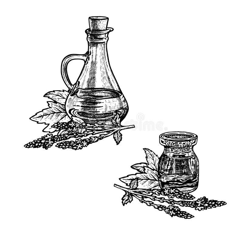 Συρμένο χέρι σκίτσο verbena του πετρελαίου Εκχύλισμα των εγκαταστάσεων επίσης corel σύρετε το διάνυσμα απεικόνισης ελεύθερη απεικόνιση δικαιώματος