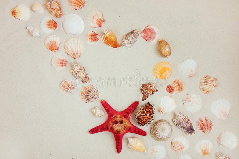 Τα κοχύλια θάλασσας και το κόκκινο αστέρι αλιεύουν στην αμμώδη παραλία με το διάστημα αντιγράφων για το κείμενο στοκ εικόνα με δικαίωμα ελεύθερης χρήσης