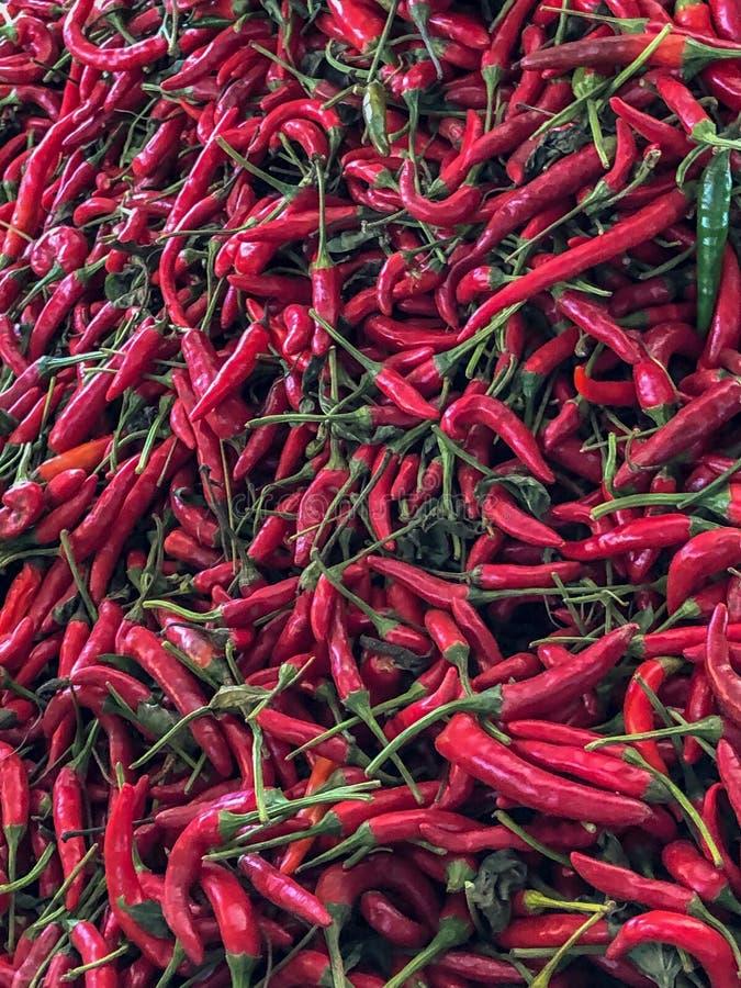 Τα κόκκινα πιπέρια τσίλι για την πώληση σε μια αγορά χρονοτριβούν το παζάρι σε Αγαδίρ, Μαρόκο, Αφρική στοκ εικόνα