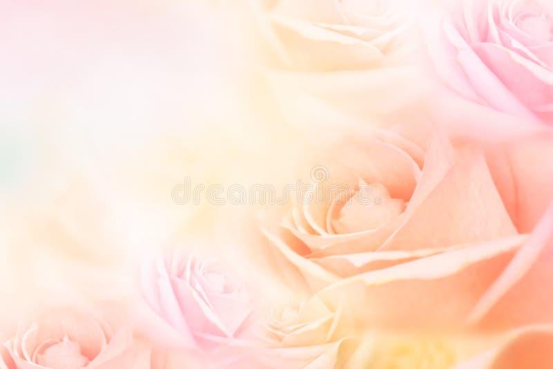 Τα μαλακά τριαντάφυλλα ανθίζουν το υπόβαθρο με το διάστημα αντιγράφων για την ιδέα κειμένων για το βαλεντίνο και το γάμο στοκ εικόνα με δικαίωμα ελεύθερης χρήσης
